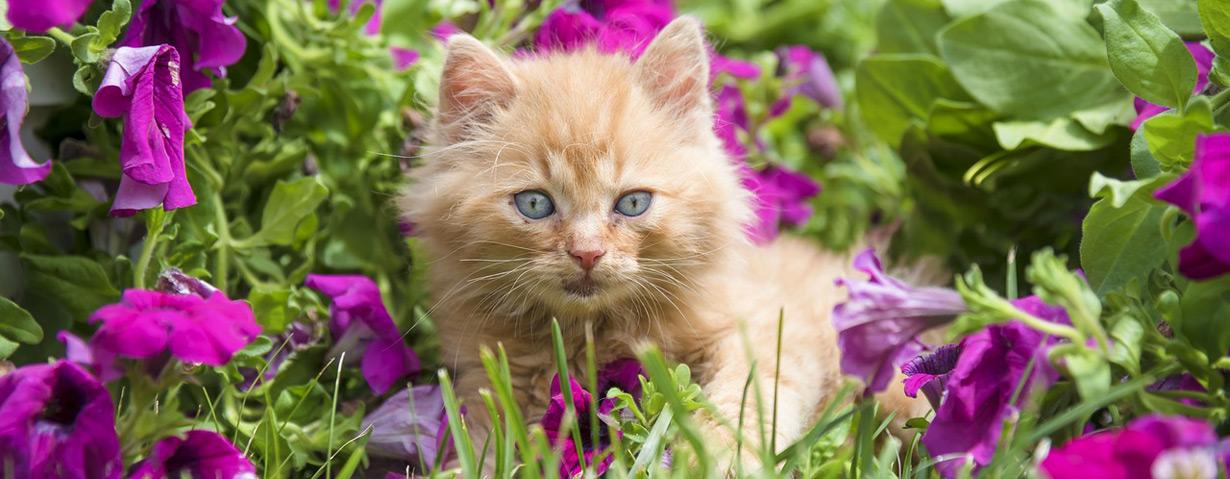 """Bündnis """"Pro Katze"""" ruft zur Katzenkastration auf"""