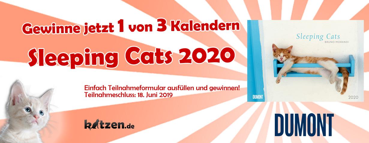 Gewinnspiel: Sleeping Cats 2020 - Wandkalender