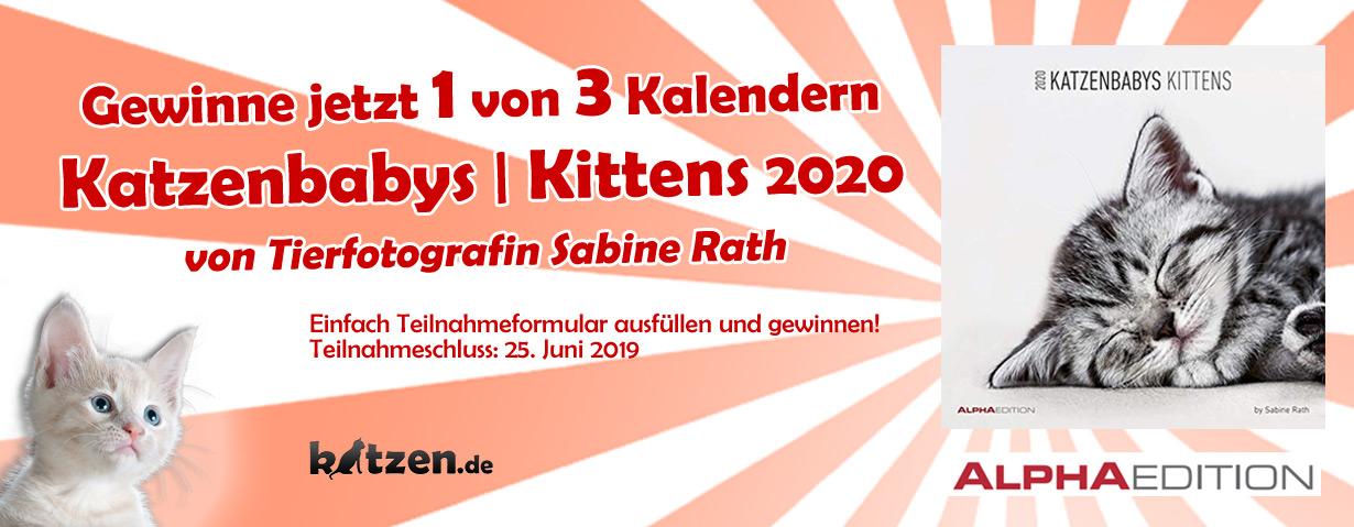 Gewinnspiel: Wandkalender Katzenbabys / Kittens 2020