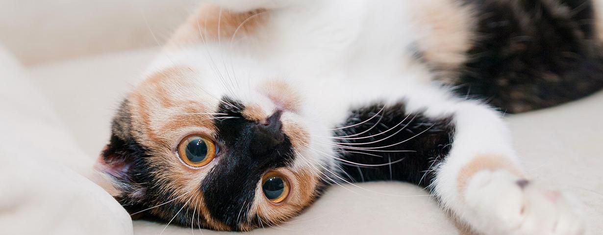 Die ideale Raumtemperatur: Katzen mögen es warm