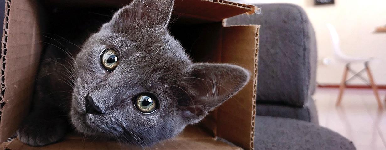 Umzug mit Katze – Stressfrei mit der Samtpfote ins neue Heim