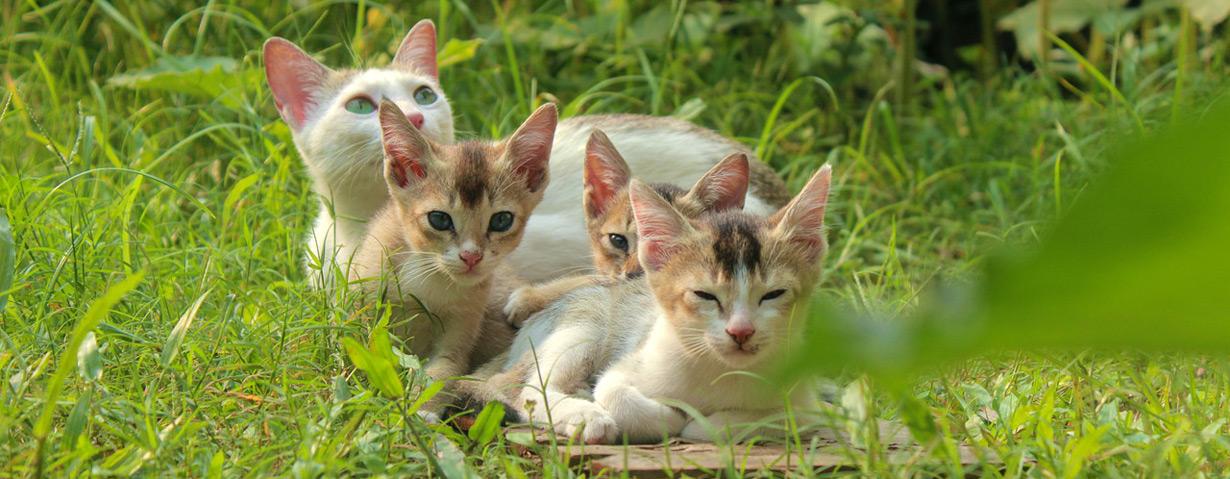 Achtung, Zeckenplage! - Wichtig: Prophylaxe für Hund und Katze