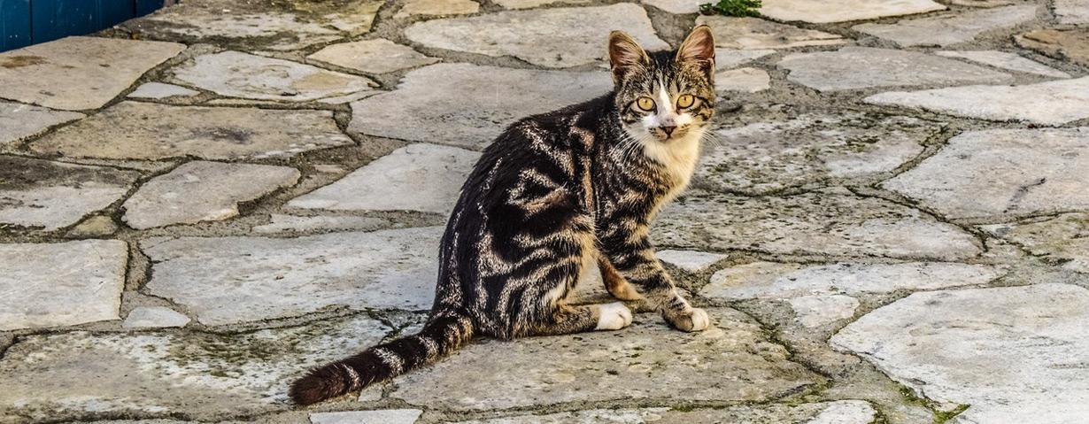 Vorsicht bei der Mitnahme von Straßentieren aus dem Ausland