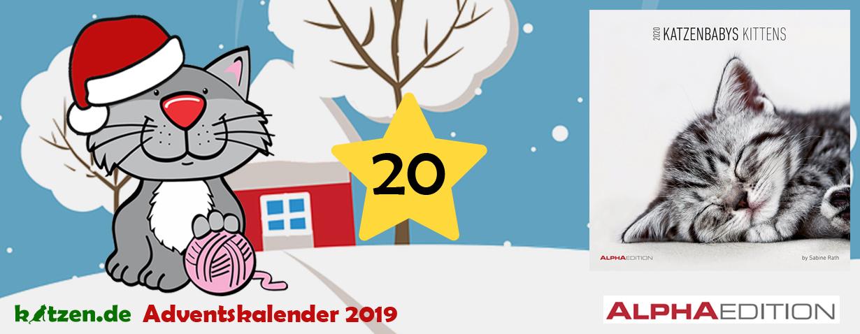 Gewinnspiel: Katzenbabys / Kittens 2020 - Wandkalender