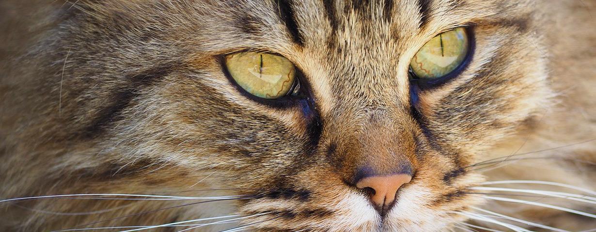 Tipps bei tränenden Augen von Hund und Katze