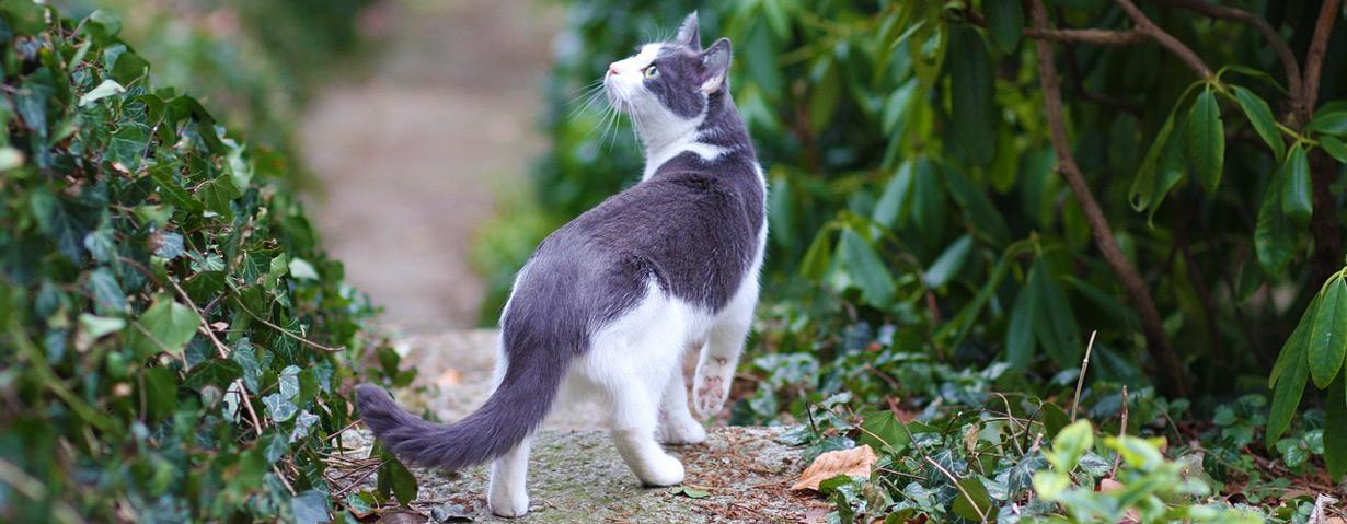 Katze vermisst – Tipps für die Suche nach entlaufenen Katzen