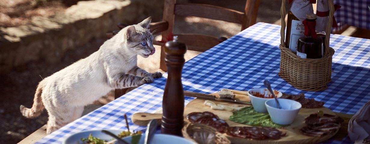 Diese Dinge sind tabu für Katzen