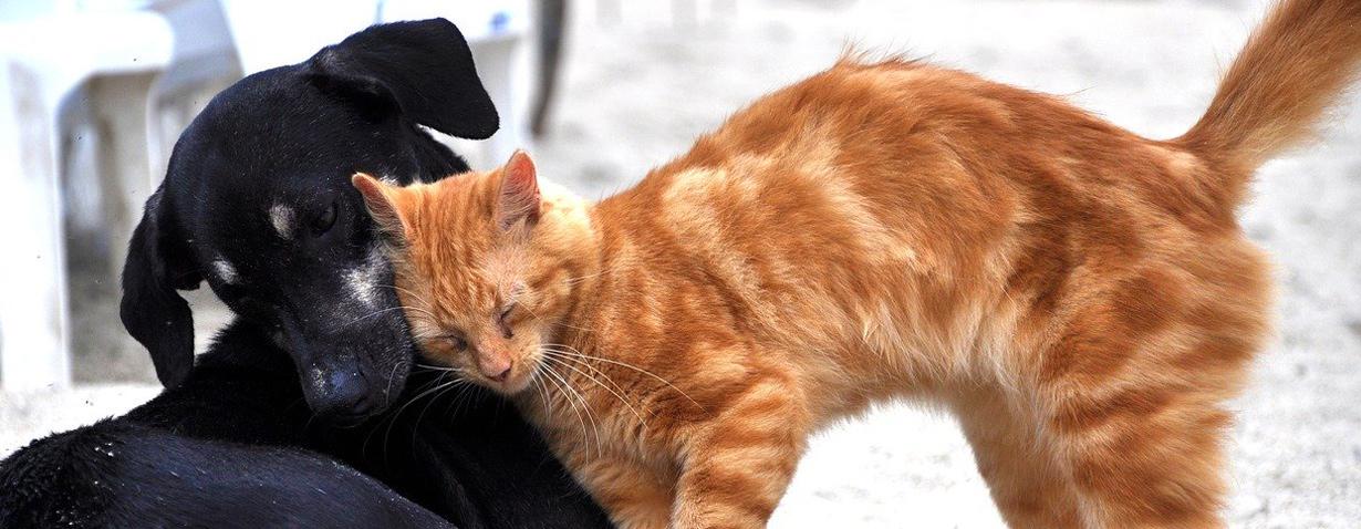 Gefährliche Untermieter – Darmparasiten begleiten Hund und Katze vom ersten Lebenstag an