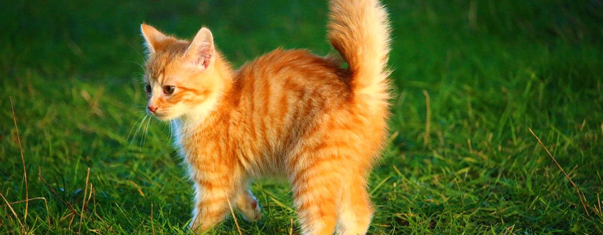 """Der Alltag mit dem """"Pubertier"""" - Wie Hunde und Katzen ihre Pubertät durchleben"""
