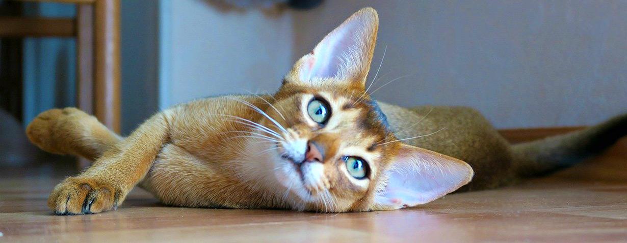 Wie sinnvoll ist eine Katzenkrankenversicherung wirklich?