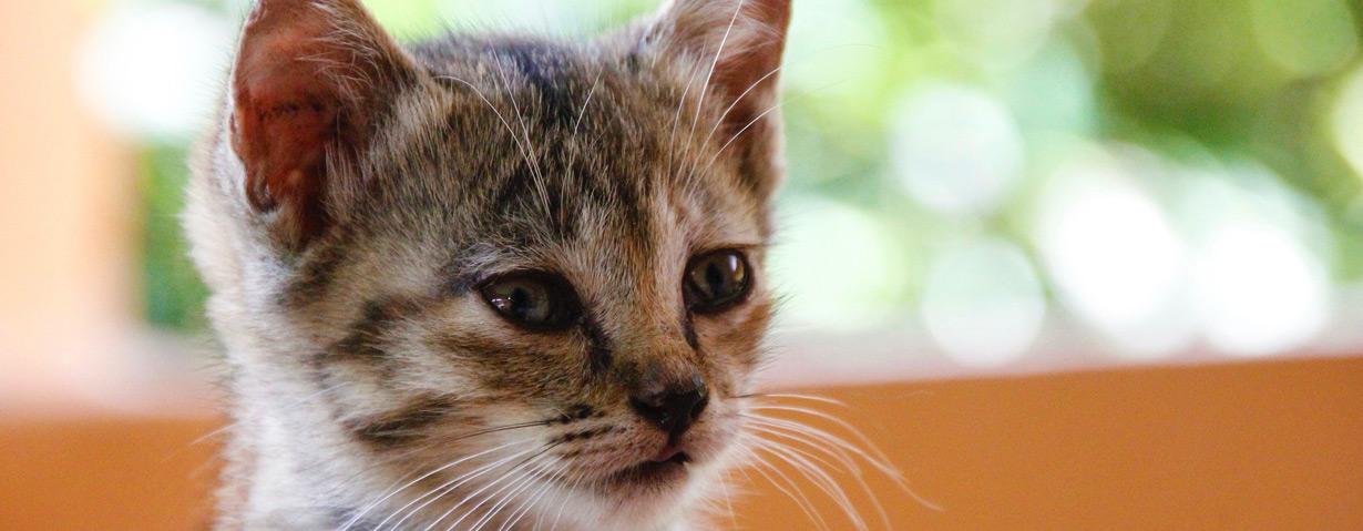 """PETA appelliert an Tierhalter: """"Herbstkatzen"""" jetzt kastrieren zu lassen"""