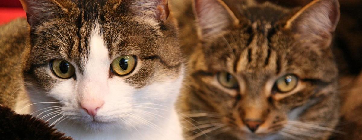 Coronavirus bei Haustieren: Keine Ansteckungsgefahr durch unsere Haustiere
