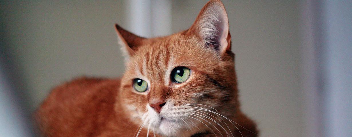 Tier-Notdienst wird teurer, Tierheime dafür bessergestellt