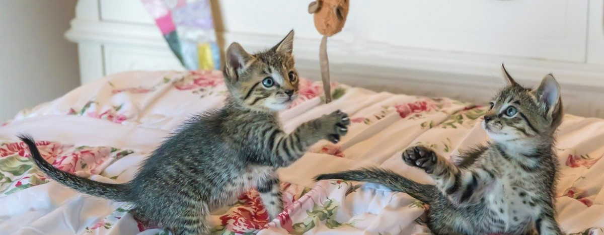COVID-19: Zeit mit dem Haustier zu Hause genießen – VIER PFOTEN gibt Tipps für Beschäftigungsmöglichkeiten
