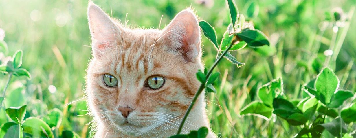 Achtung, Flohzeit! PETA-Expertin gibt Tipps zur Vorbeugung und Behandlung von Flohbefall bei Hund und Katze