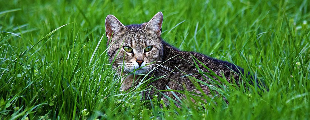 Die Gefahr aus der Wiese – Anti-Zecken-Tipps für Tierhalter