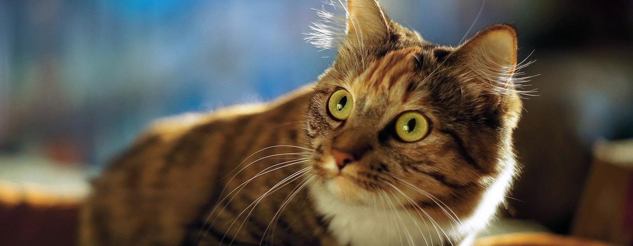 Tipps und News für Katzenhalter in Corona-Zeiten