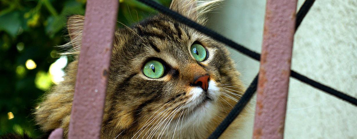 Tierheime berichten von steigenden Abgabezahlen – VIER PFOTEN appelliert, auch nach dem Lockdown Verantwortung für Heimtiere zu übernehmen