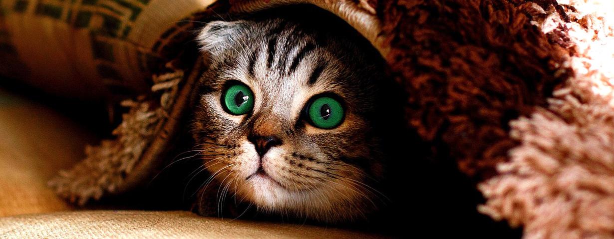 Am Weltkatzentag ein Zeichen gegen Qualzuchten setzen
