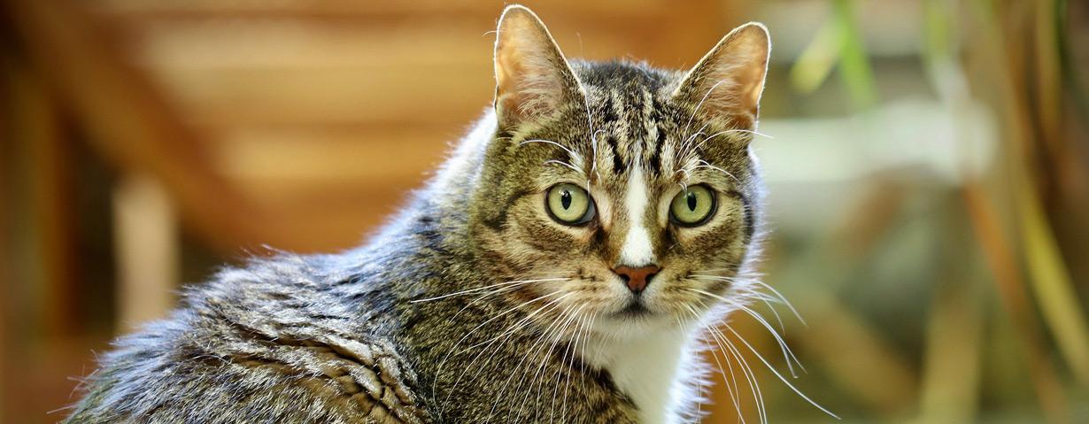 Herbstzeit ist Fellwechselzeit – PETAs Tipps für eine unterstützende Fellpflege bei Hund und Katze
