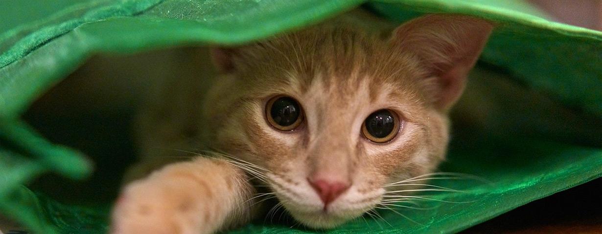 Bundesweiter Warntag am 10. September: Tiere vor Lärmbelastung schützen