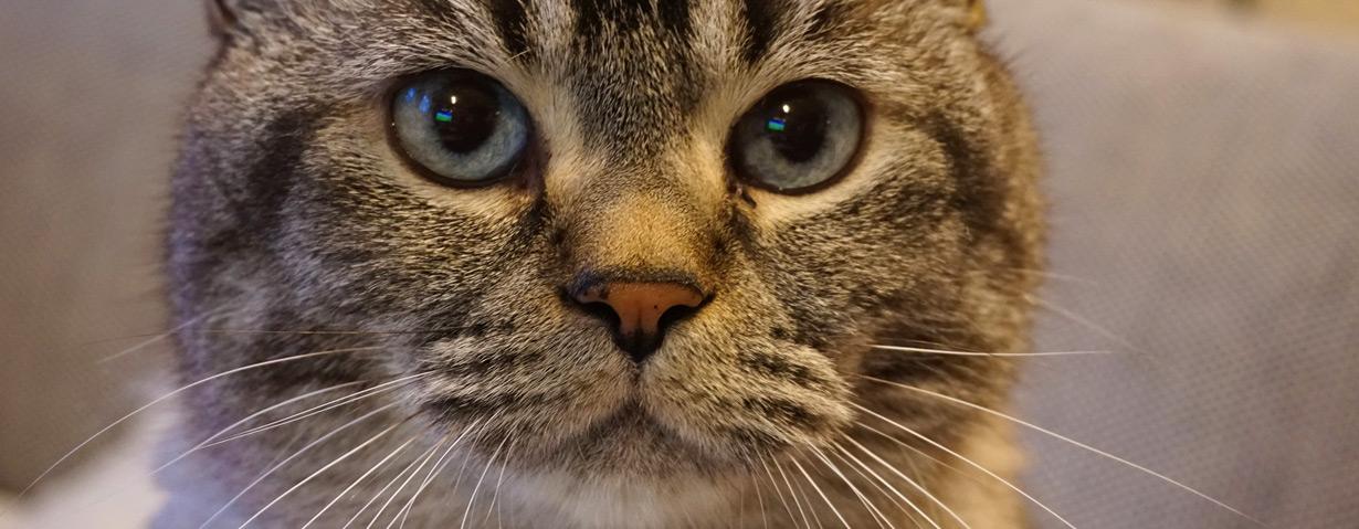 Erste Hilfe für das Haustier – ARAG Experten erläutern Hilfsmaßnahmen für verletzte Vierbeiner