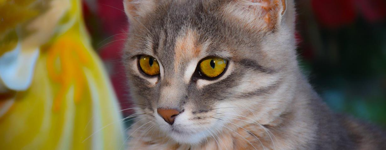 Die letzte Ruhestätte für den tierischen Begleiter – Welche Möglichkeiten gibt es bei der Haustierbestattung?