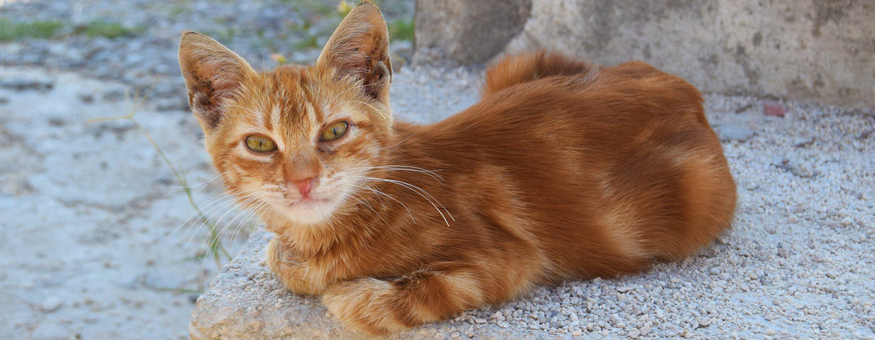 Herrenlose Katzen in Not – VIER PFOTEN gibt Tipps, wie man Streunerkatzen helfen kann