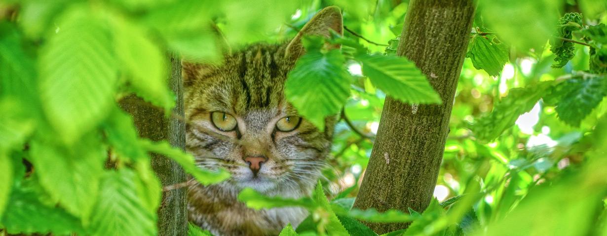 Balu entlaufen? Luna vermisst? – TASSO gibt Tipps für die Suche nach Hund und Katze