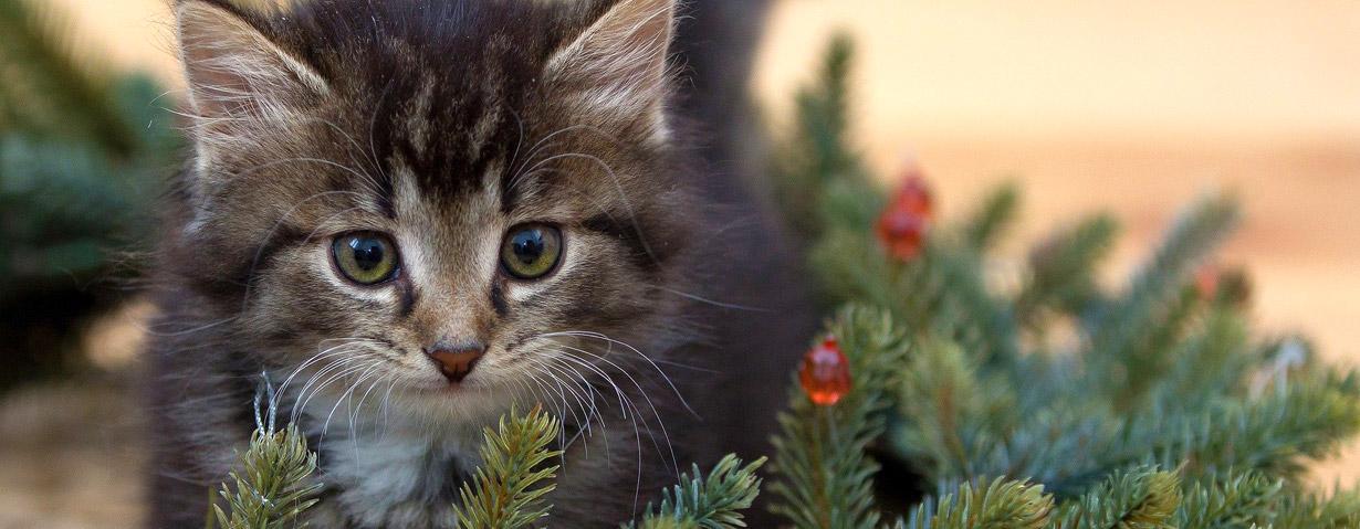 Vorweihnachtszeit mit Tier sicher gestalten – Gefahrenquellen für Hund, Katze und Kleintier vermeiden