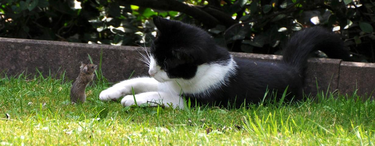 Bandwürmer bei Katzen – eine verschlungene Angelegenheit