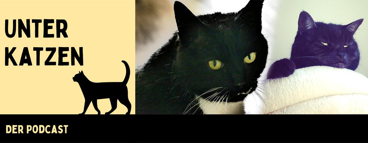 """""""Unter Katzen"""" – der etwas andere neue Katzen-Podcast"""
