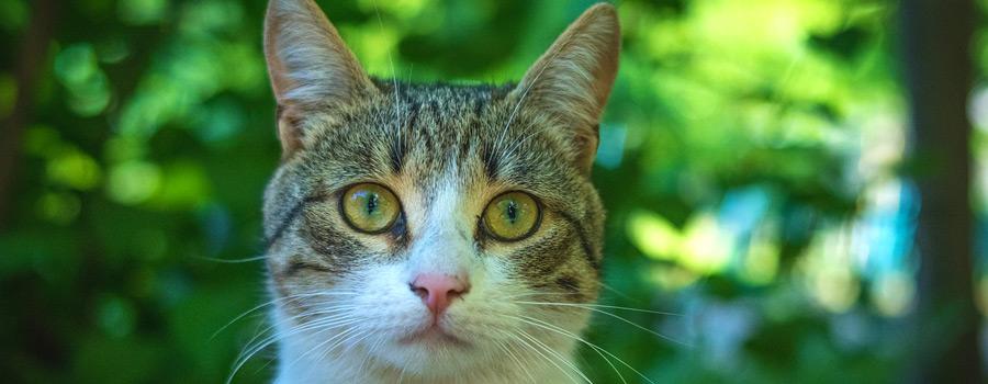 https://www.katzen.de/magazin/vom-familienmitglied-bis-zum-autonomen-mitbewohner-viele-tierhalter-achten-auf-den-impfschutz-ihrer-tiere/