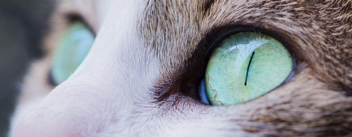 Alles im Blick? – Was Besitzer tun können, wenn Katzenaugen den Durchblick verlieren