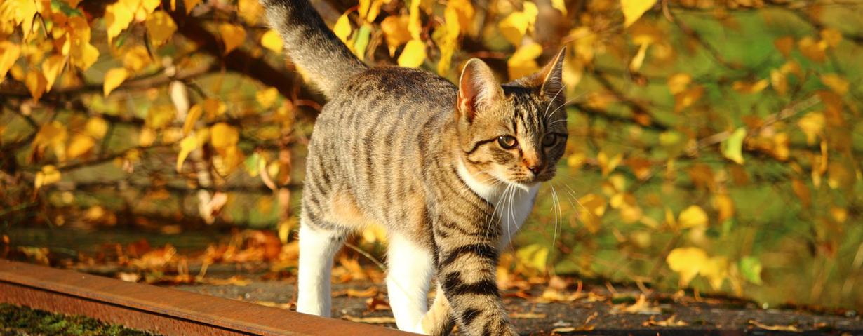 """PETA appelliert an Tierhalter, """"Herbstkatzen"""" jetzt kastrieren zu lassen"""