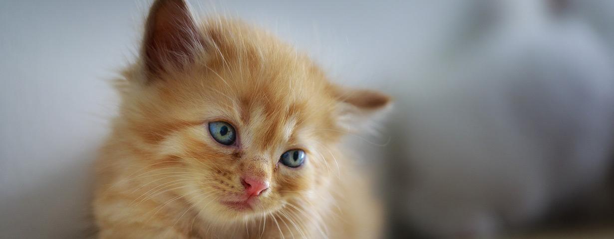 Nach dem Lockdown droht Trennungsstress für Hund und Katze