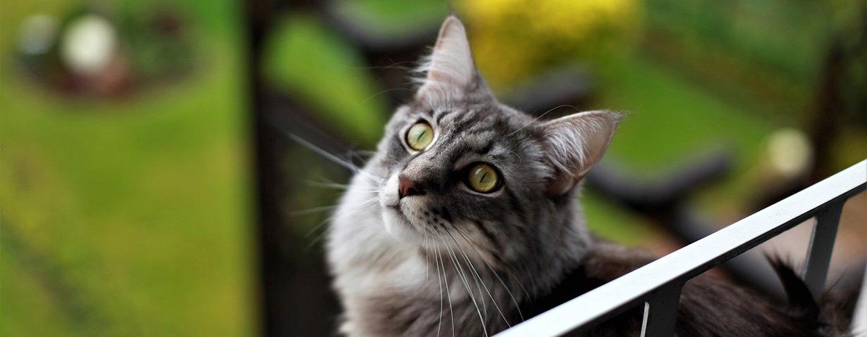 Tierarztbesuch ohne Stress für Tier und Besitzer