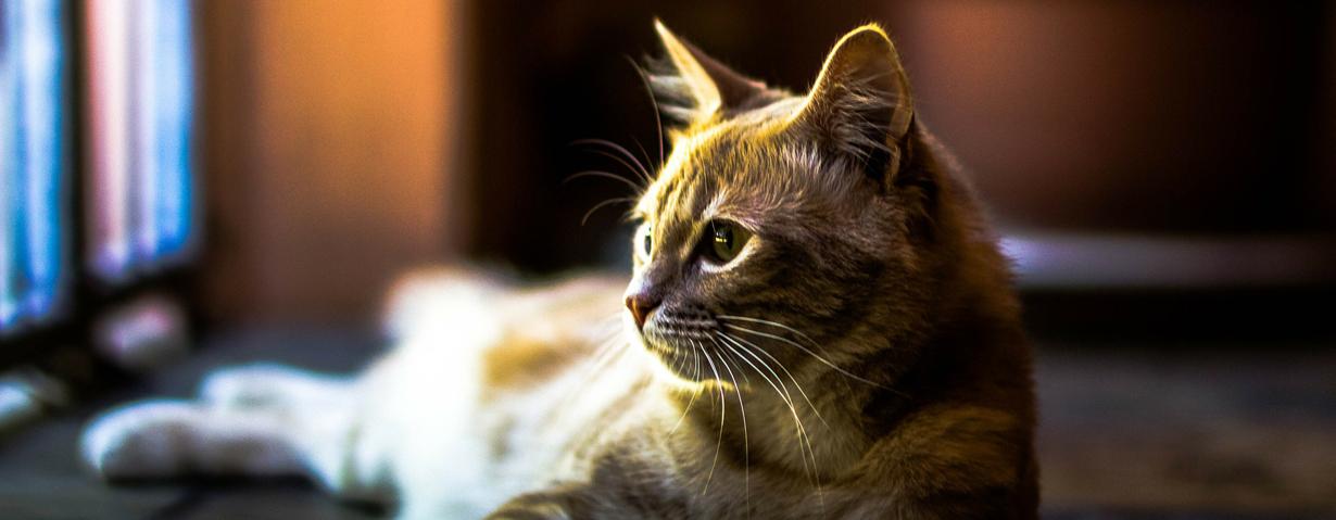 Hund und Katze mit Demenz – Wie Halter ihrem tierischen Freund das Leben erleichtern können