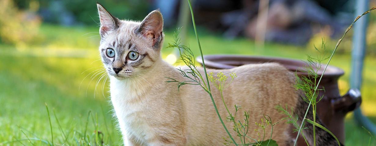 Abwechslungsreich und sicher – TASSO gibt Tipps für einen tierfreundlichen Garten