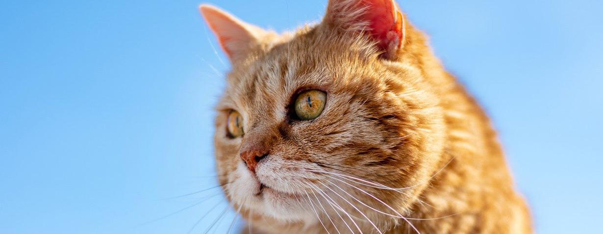 Hund und Katze im Alter – Tipps für den Umgang mit Tiersenioren
