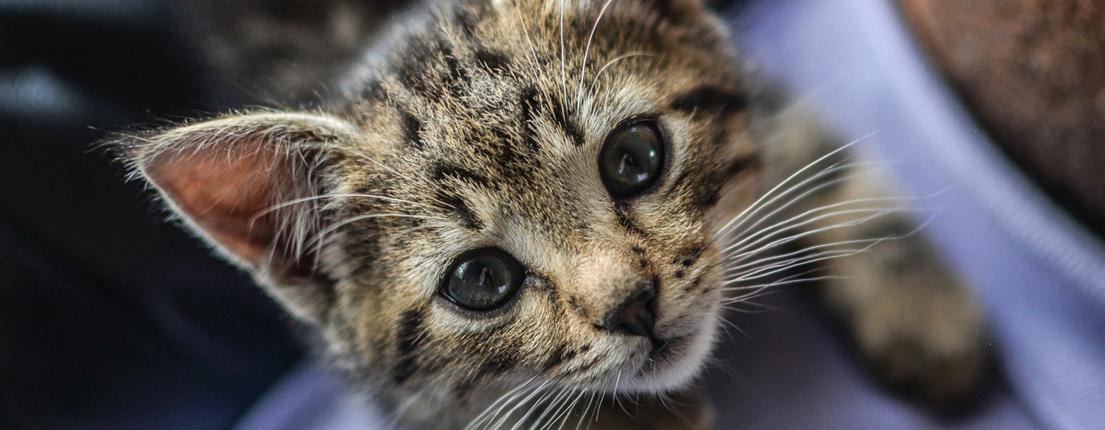 Wie findet man den richtigen Tierarzt/ Tierärztin?