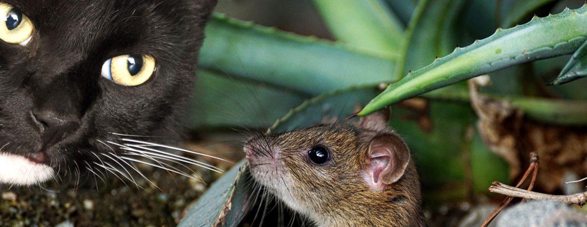 Die Katze lässt das Mausen nicht…