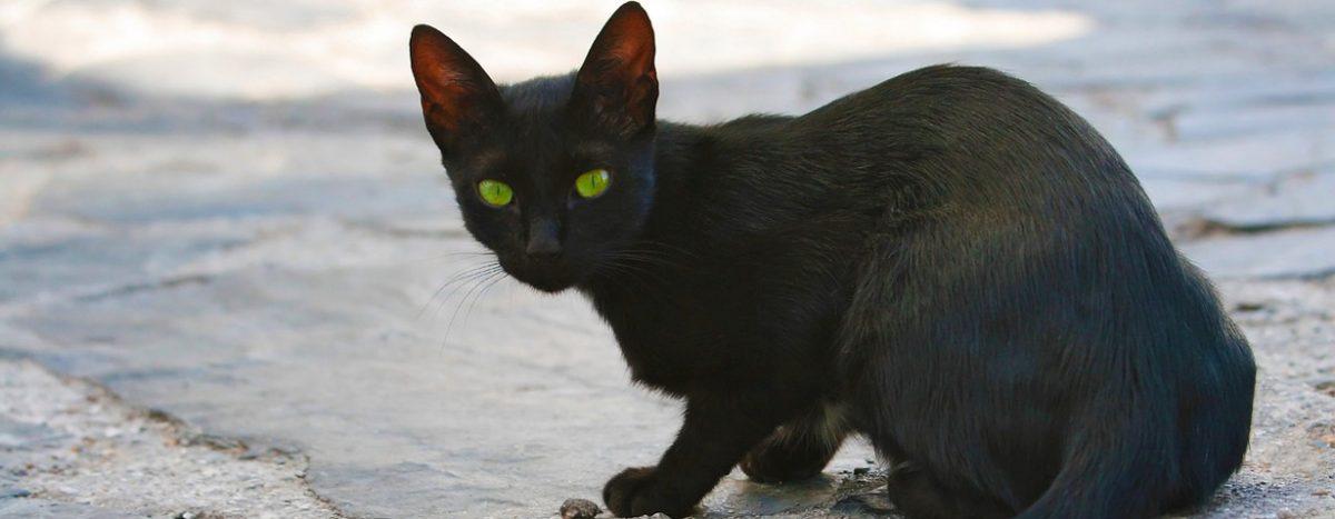 Zwei Millionen Straßenkatzen: Zu wenig Unterstützung für Tierheime