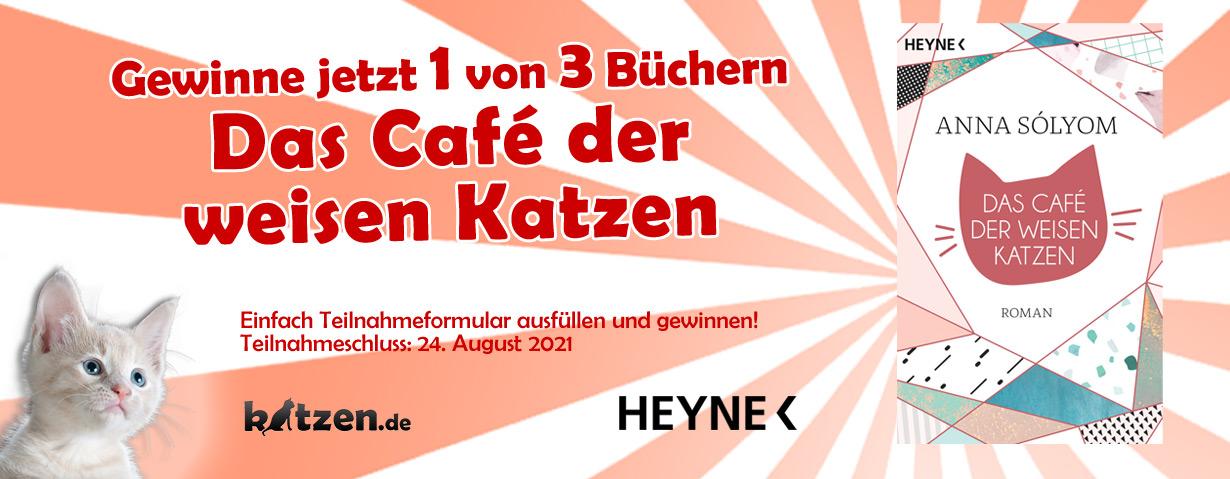 Gewinnspiel: Das Café der weisen Katzen