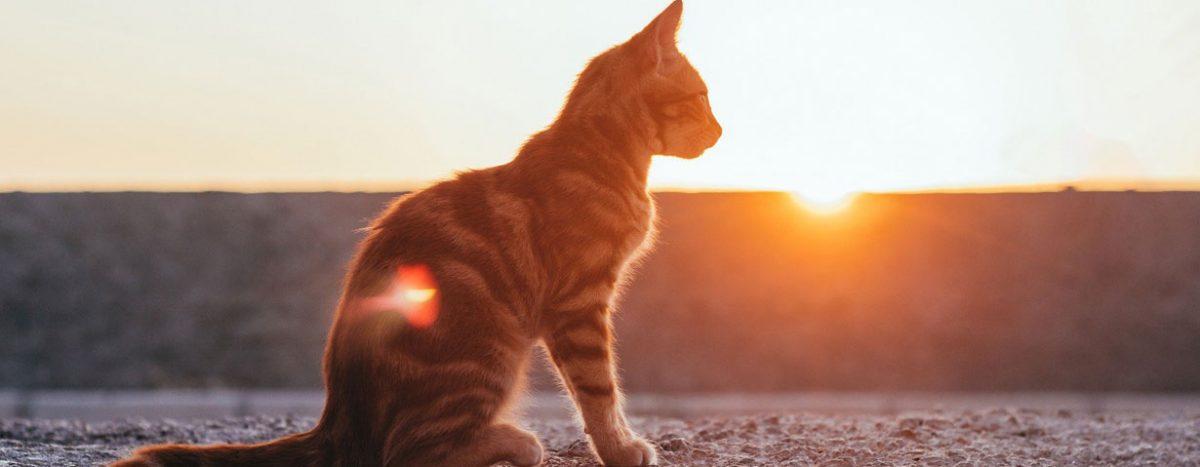 Urlaubszeit: Wohin mit meiner Katze?