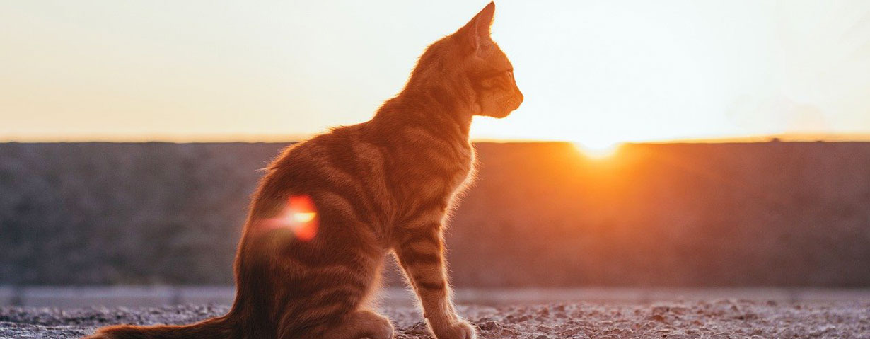 Hitzebelastung bei Hund, Katze und Kleintier – So schützen Halter ihre Haustiere