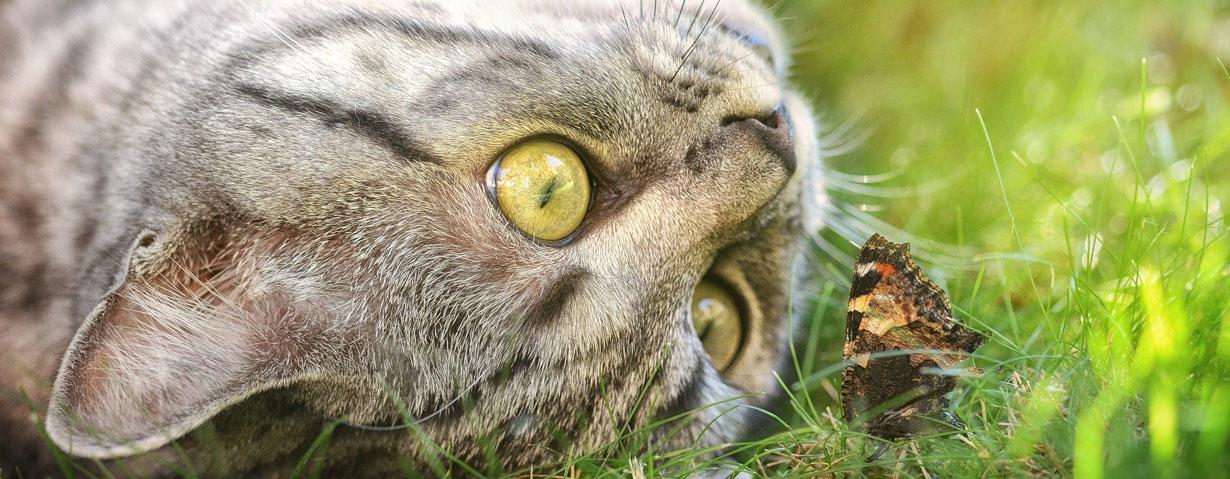 Die beliebtesten Katzenrassen und -namen in Deutschland