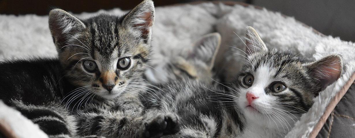 Krankenversicherung für Katzen – wie sinnvoll ist sie wirklich