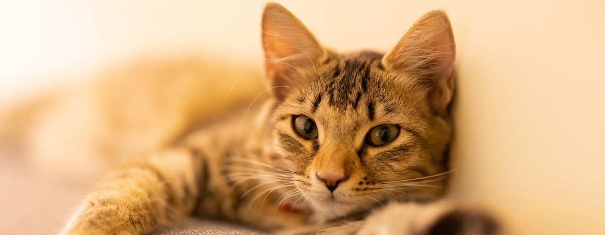 Passt ein tierischer Begleiter in mein Leben?
